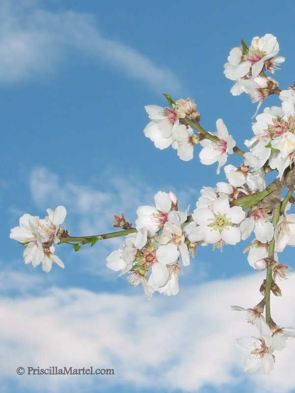 Blooms in close up against sapphire sky-001