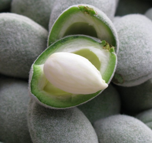 Green almonds, a celebration of spring