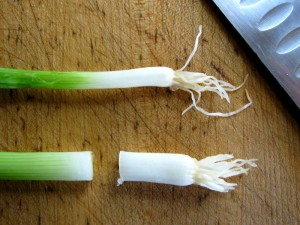 Trimming scallions to plant
