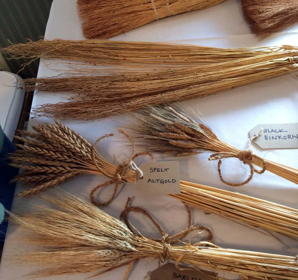 Varieties of Wheat Grown in Vermont