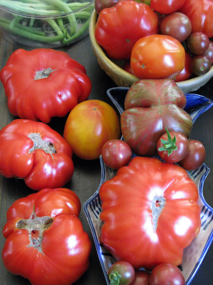 Tomatoes Summer 2015