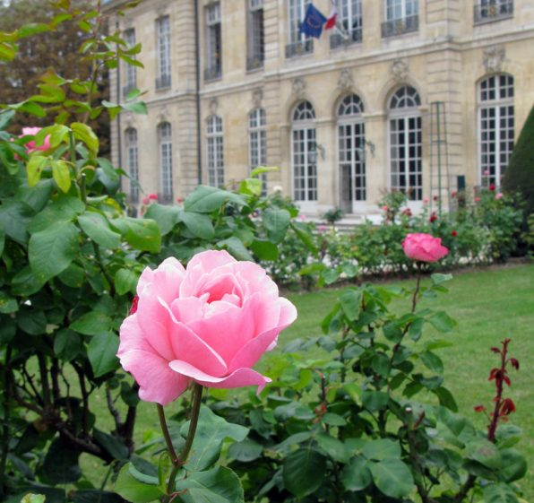 Roses at the Musee Rodin